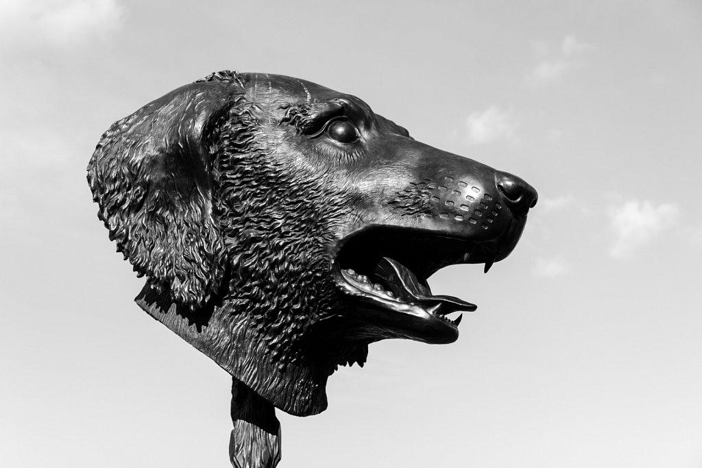 Animals Heads